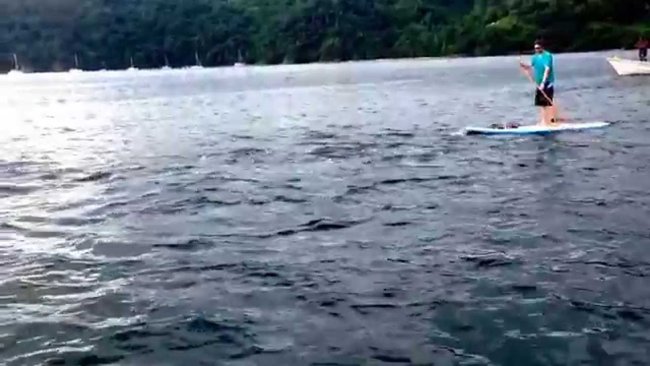 Dolphins on our stand up paddle tour in Tobago