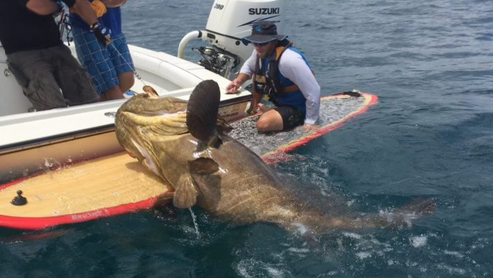 Huge Grouper caught on a Paddle Board