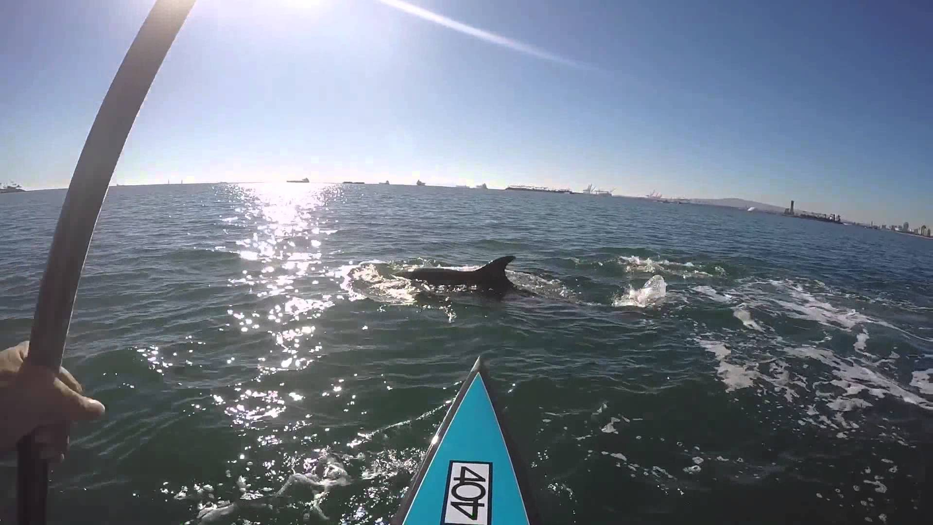 John Gabriel, The Man Who Stand Up Paddles With Dolphins… Everyday!