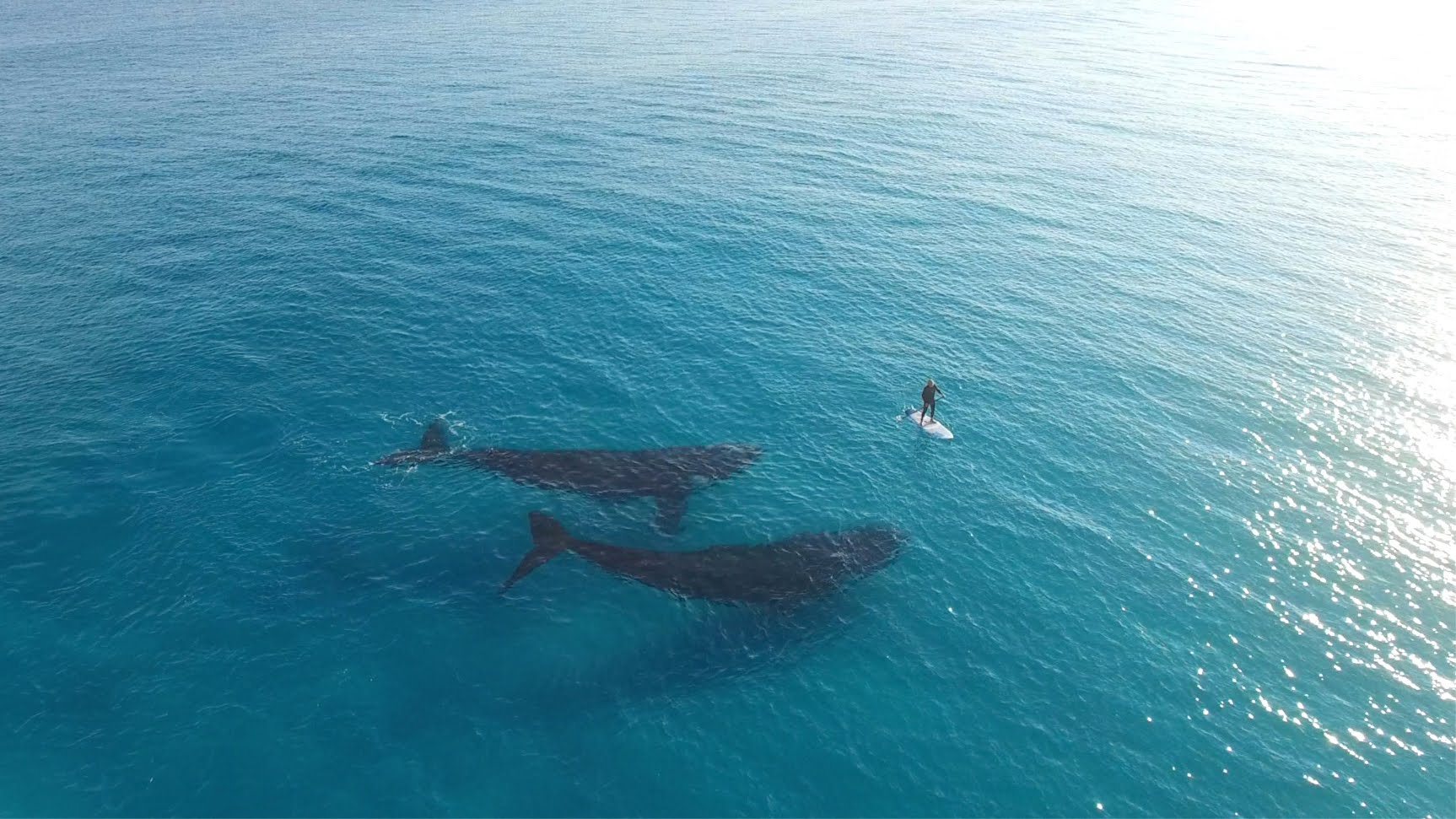 Sharing the ocean with whales