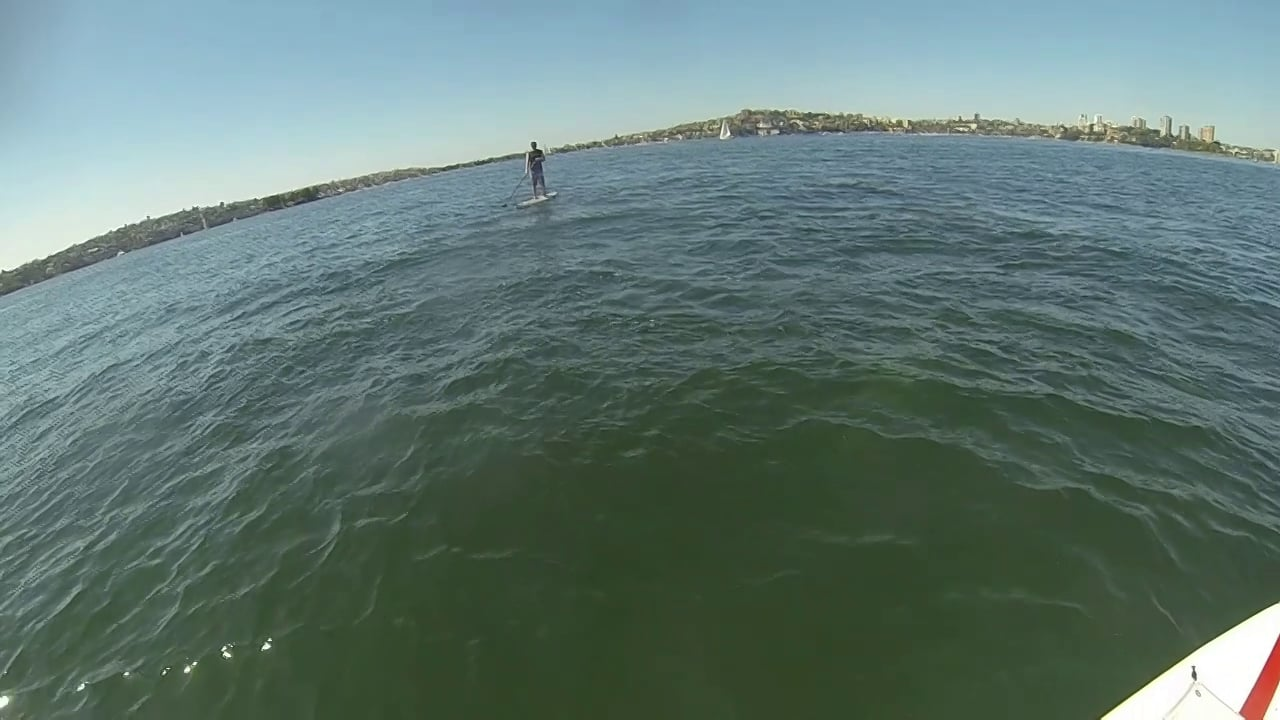 Stand Up Paddling with Dolphins in Sydney