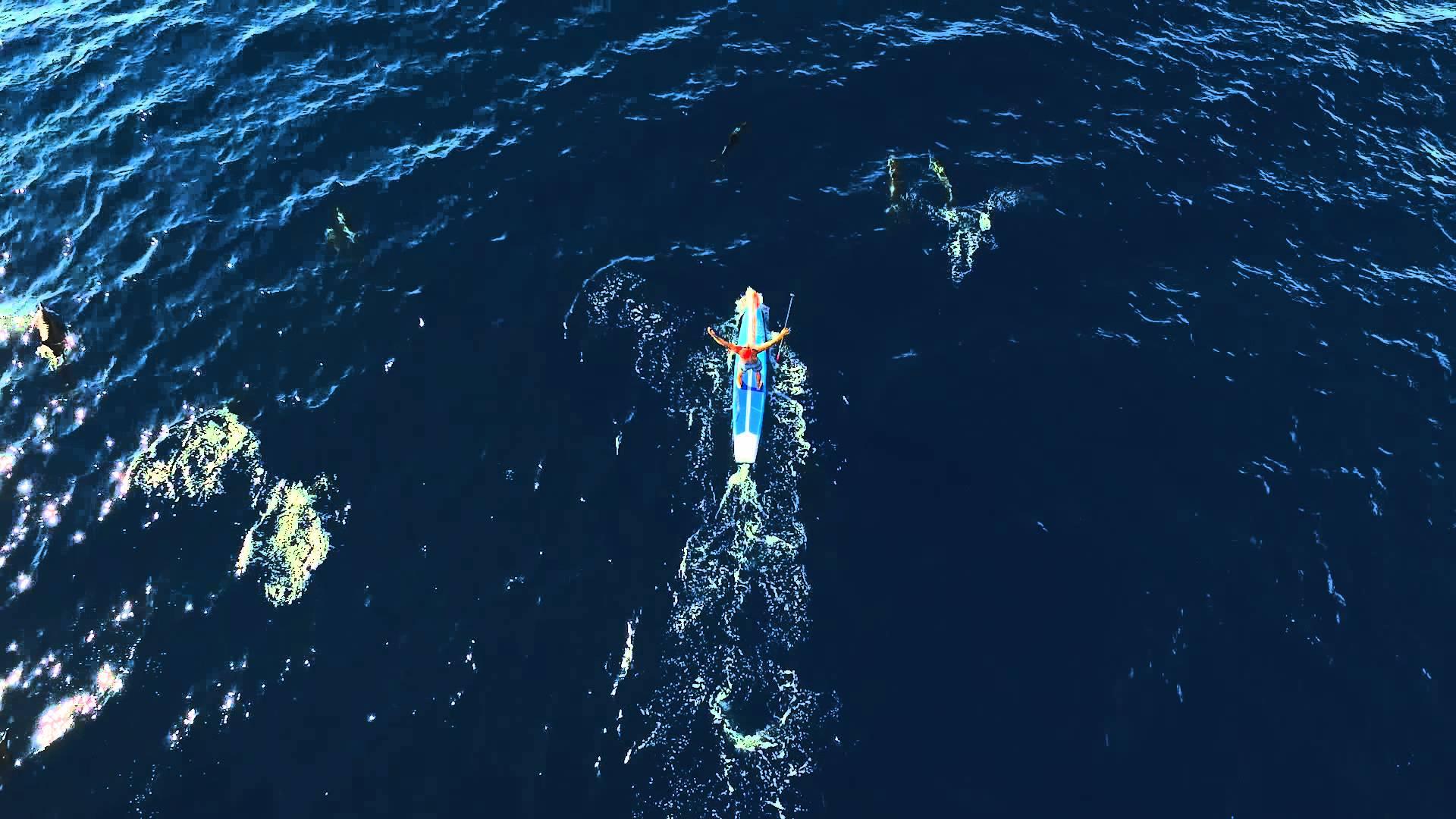 Zane Schweitzer Paddling with Dozens of Dolphins  in Oahu, Hawaii