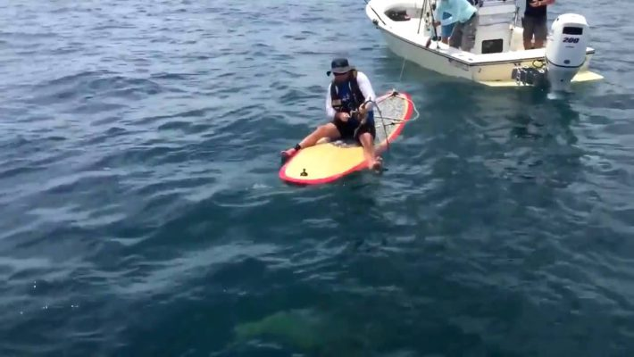 A Stand Up Paddle Angler catch a 420 pounds hake !