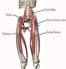 hip-flexors-2