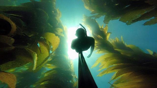 Morgan Catalina Ocean Experience