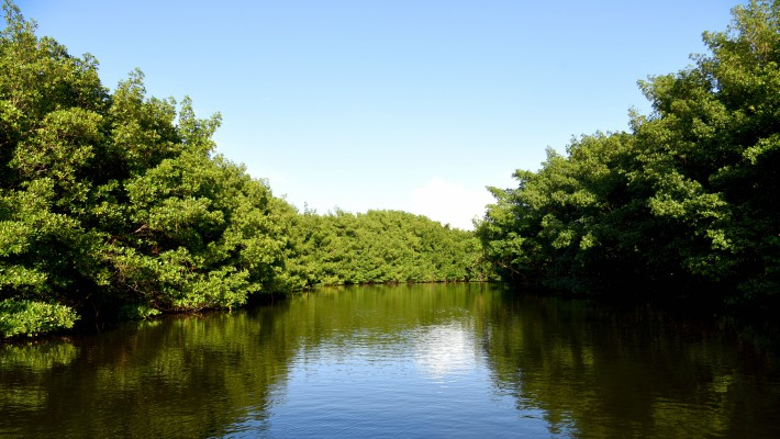 The beautiful mangroves of the Canal des Rotours in Guadeloupe on a good day