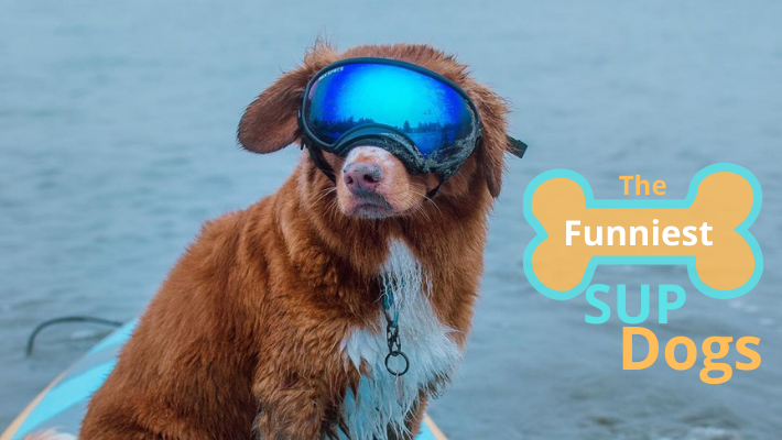 The funniest SUP Dogs – Compilation of Stand Up Paddleboard Dogs